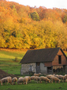 vallee_automne_animal_moutons.jpg