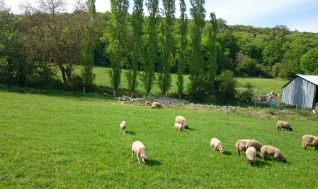 vallee_printemps_animal_moutons_1.jpg
