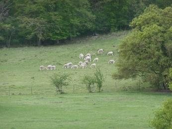 vallee_printemps_animal_moutons_2.jpg
