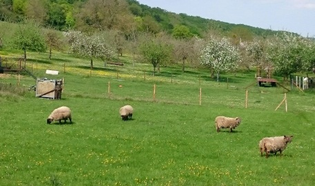 vallee_printemps_anumal_moutons_2.jpg